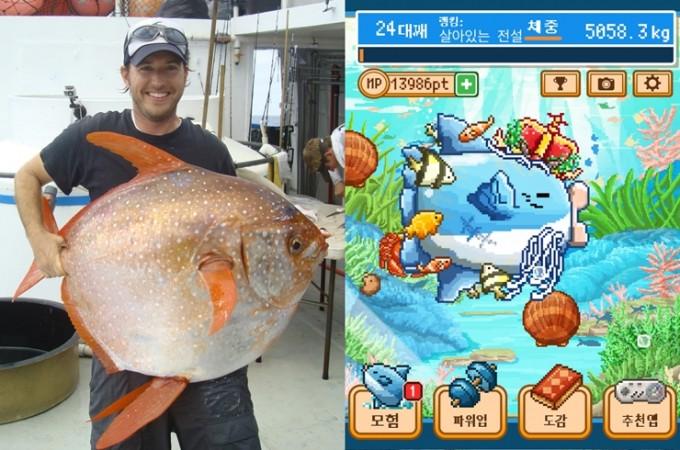 연구 책임자 니콜라스 웨그너가 이번 연구 대상이었던 붉은개복치를 들어보이고 있다.(왼쪽)/ 스마트폰 화면 속을 가득 채운 먹잇감을 순식간에 먹어치우는 게임 속 개복치 - 미국 해양기상청(NOAA)/ 게임